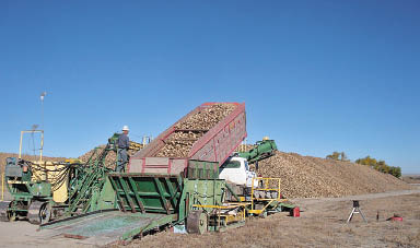 Unloading sugarbeets at Midvale Receiving Station, Wyoming